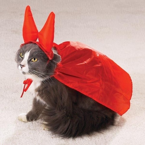 cats costumes27