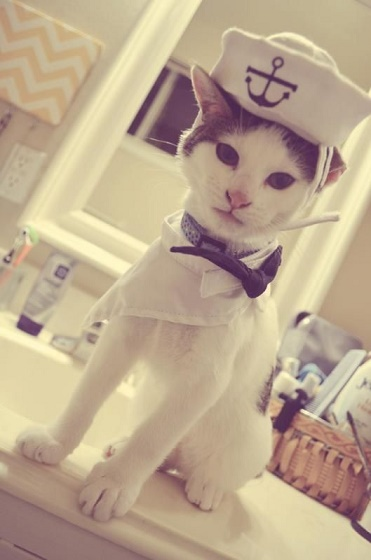 cats costumes28