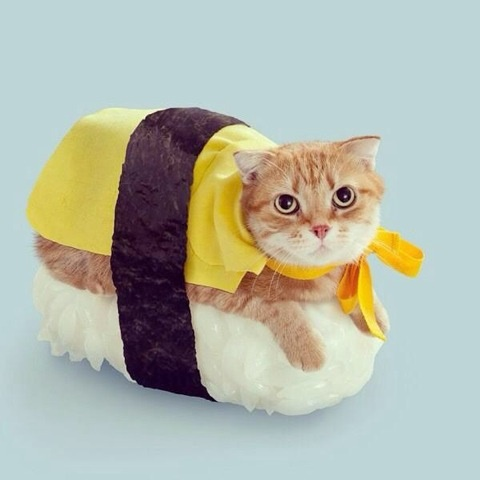 cats costumes29