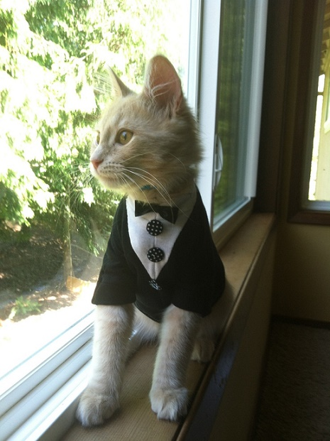cats costumes3
