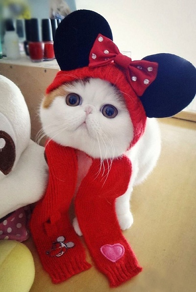 cats costumes30