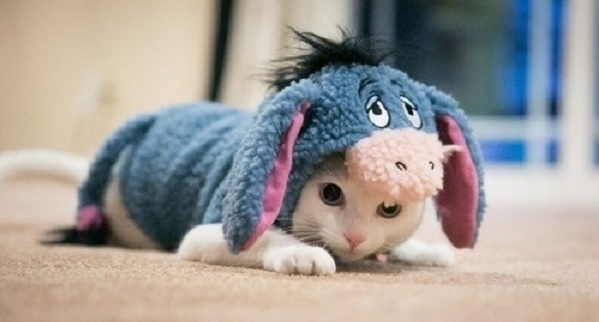 cats costumes32