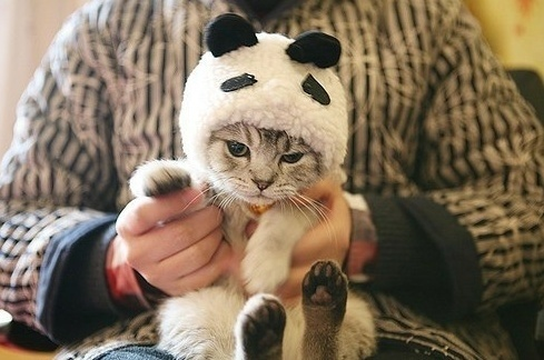 cats costumes33