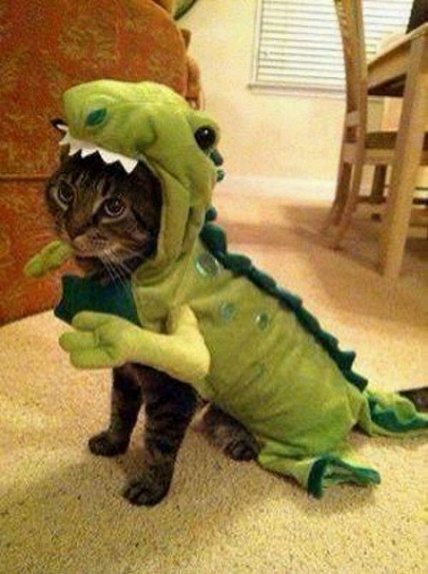 cats costumes35