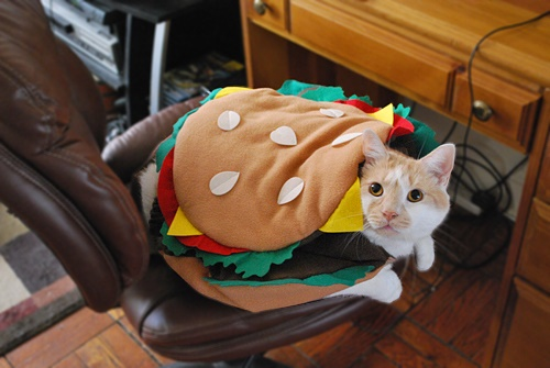 cats costumes38
