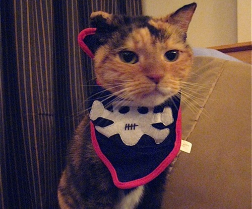 cats costumes39