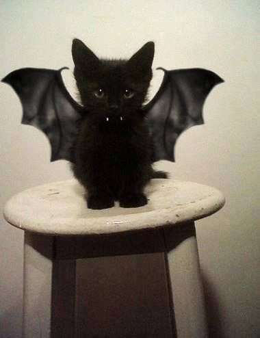 cats costumes5