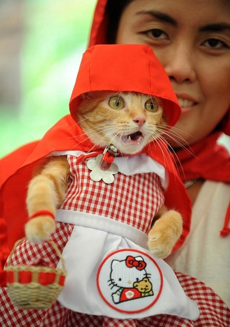 cats costumes6