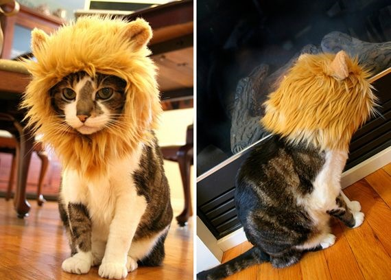 cats costumes7