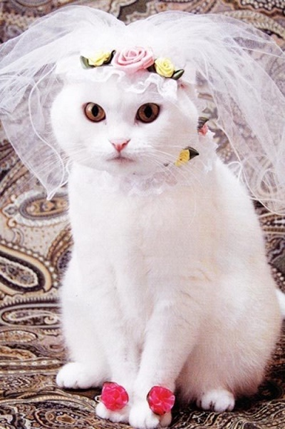 cats costumes9