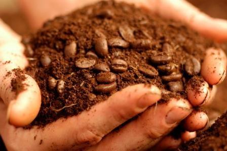 coffee grounds4