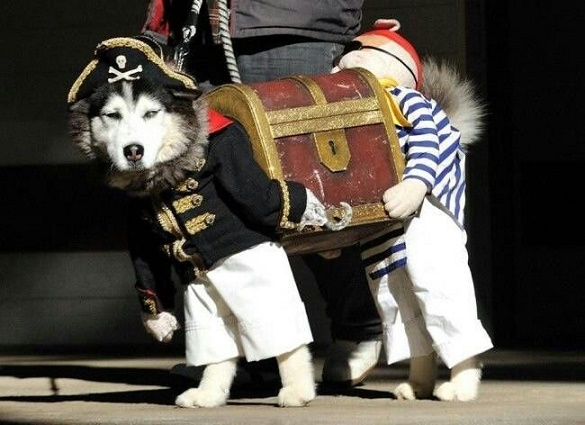 dog custome