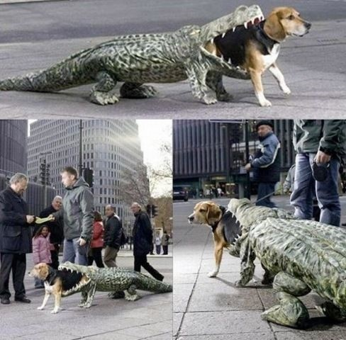 dog custome10