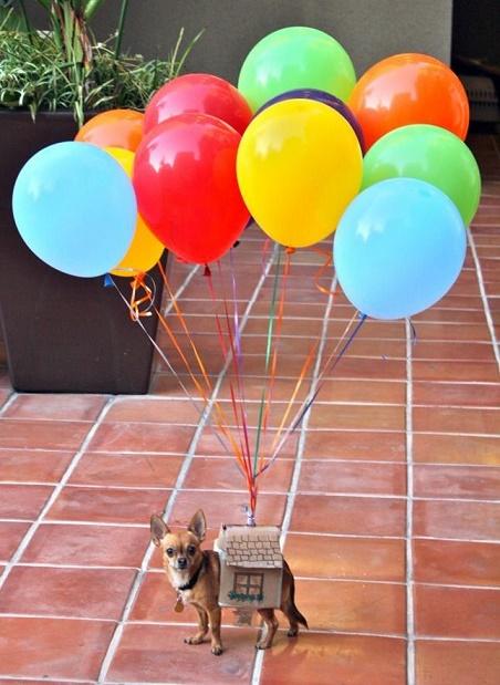 dog custome14