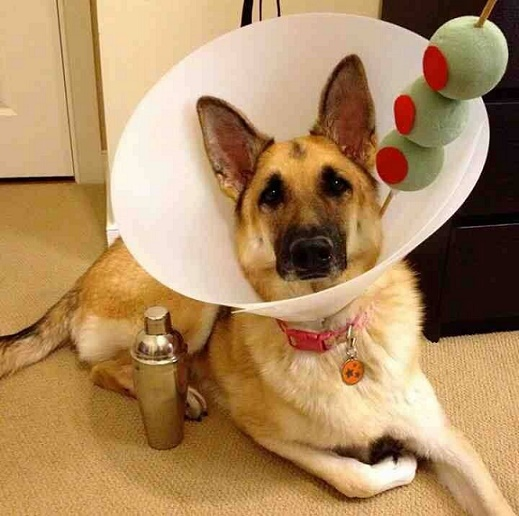 dog custome15