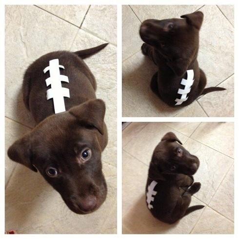 dog custome17