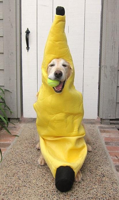 dog custome32
