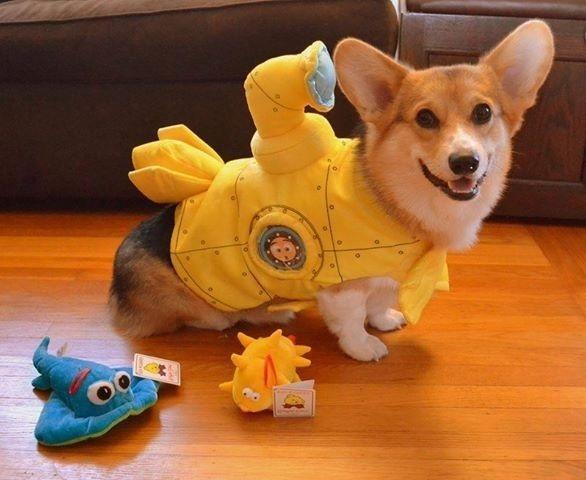 dog custome36