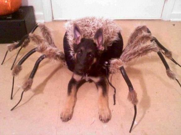 dog custome47