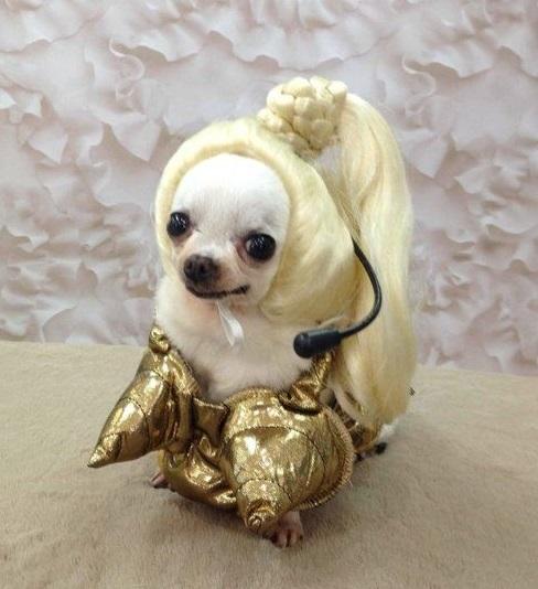 dog custome48