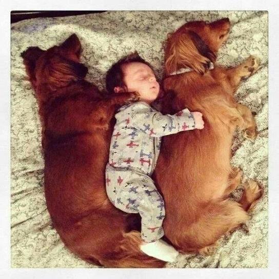 dogsandbabies14