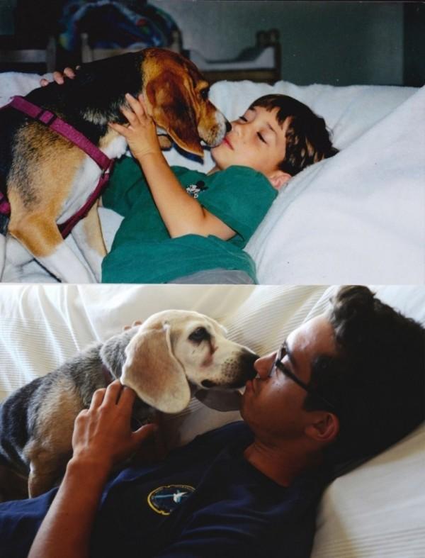 envejeciendo perritos