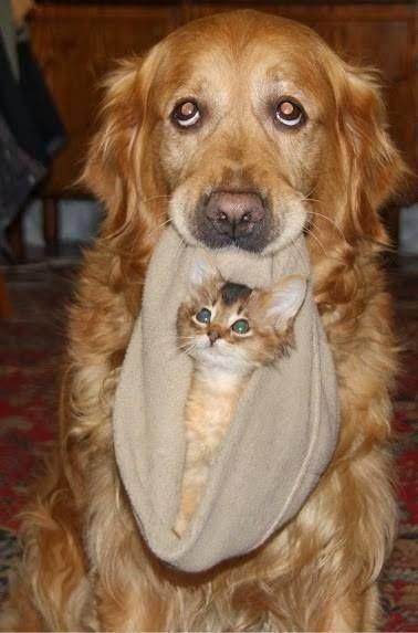 perros gato11