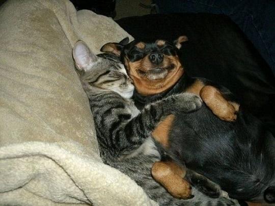 perros gato14