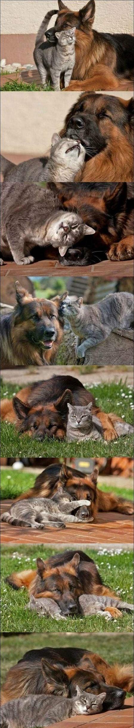 perros gato3