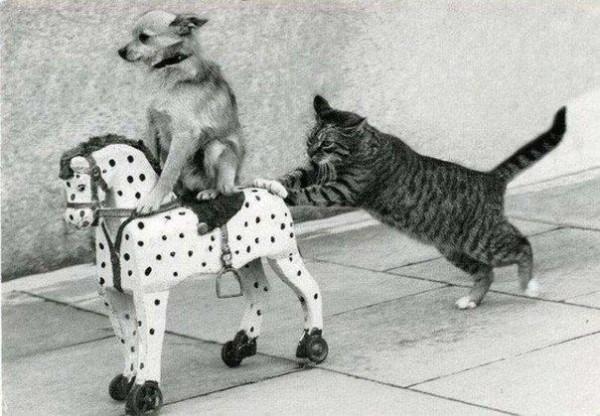 perros gato8