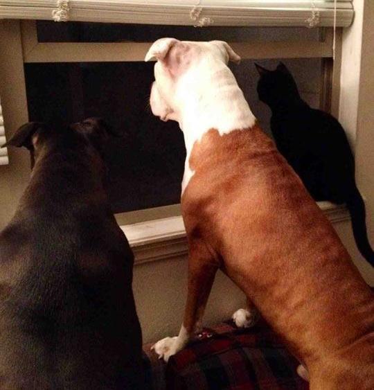 su-cara-cuando-pasa-otro-perro