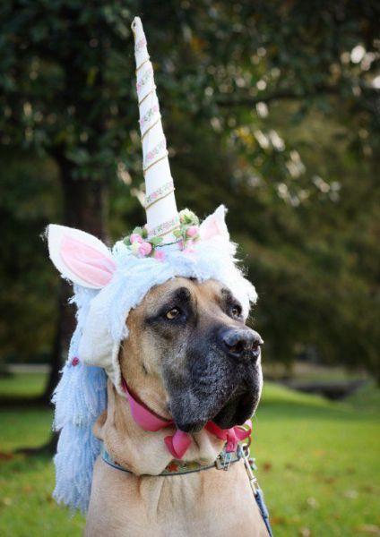 unicornio perro