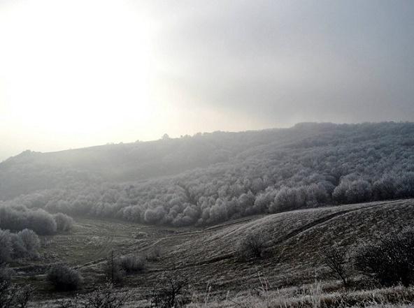 Bosque Hoia-Baciu en Rumanía.