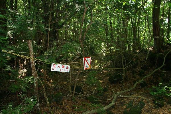 Bosque del suicidio en Japón.