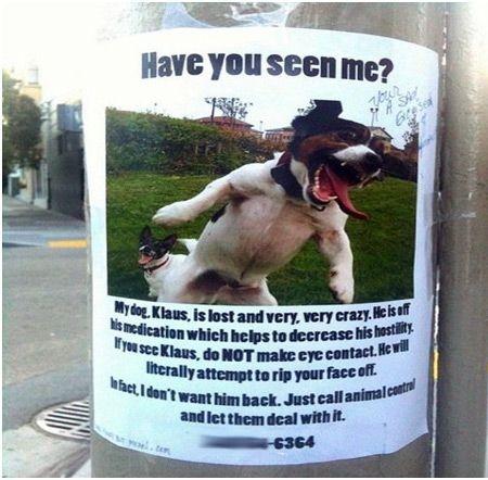 anuncios de mascotas perdidas