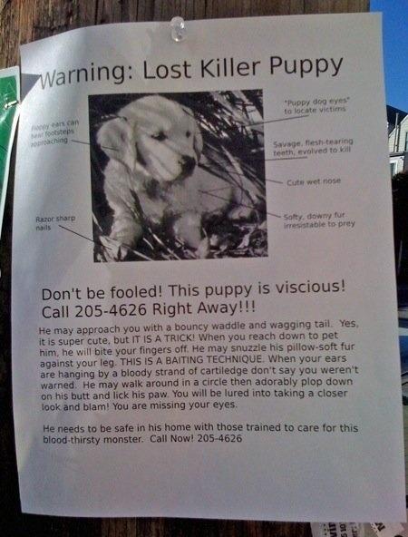 anuncios de mascotas perdidas12