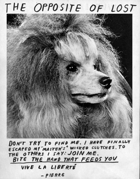 anuncios de mascotas perdidas13