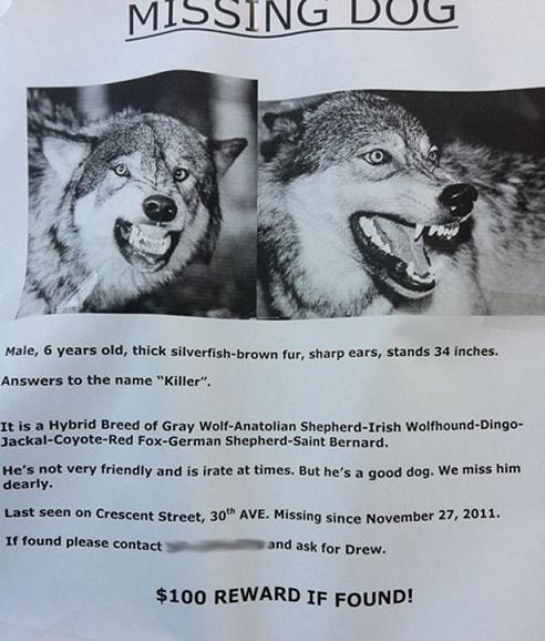 anuncios de mascotas perdidas14