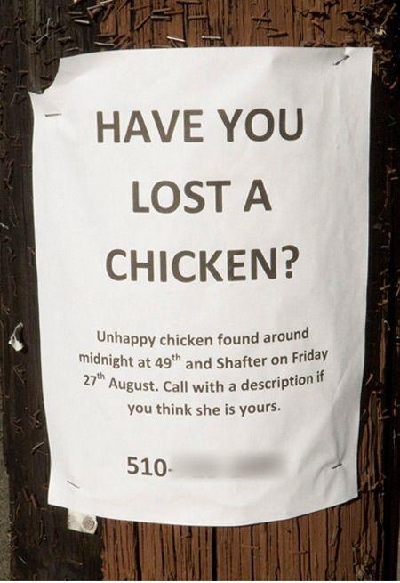 anuncios de mascotas perdidas5