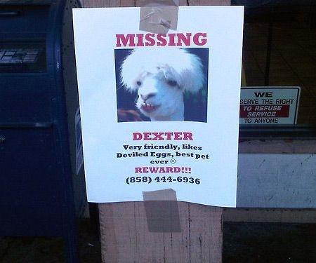 anuncios de mascotas perdidas6