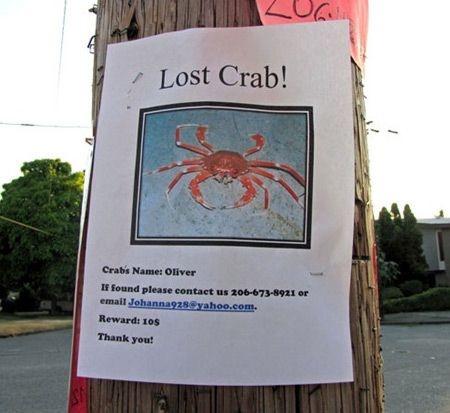 anuncios de mascotas perdidas8