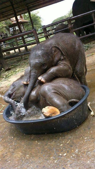La hora del baño, tiernos animales.
