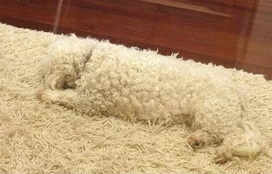 camouflaged dogs10