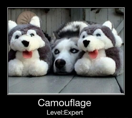 camouflaged dogs5