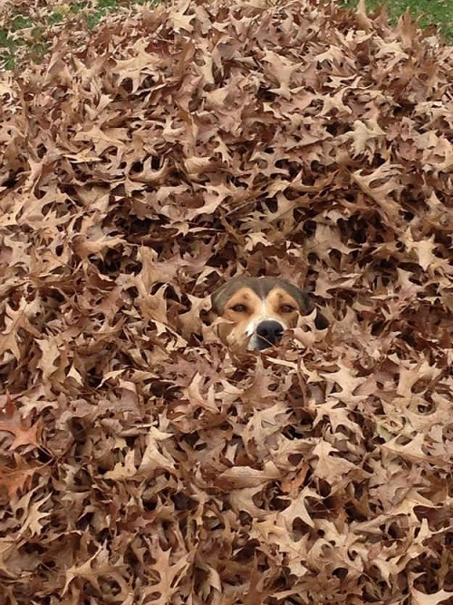camouflaged dogs7