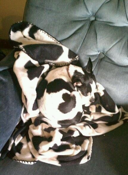 camouflaged dogs8