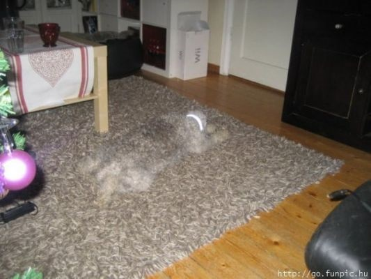 camouflaged dogs9