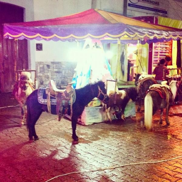 carruaje con caballo de verdad