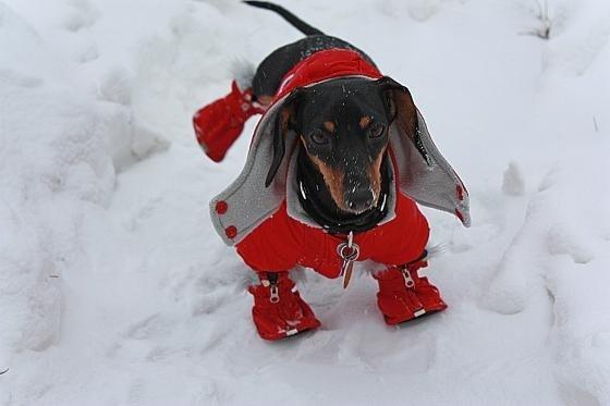 perros fashionistas10