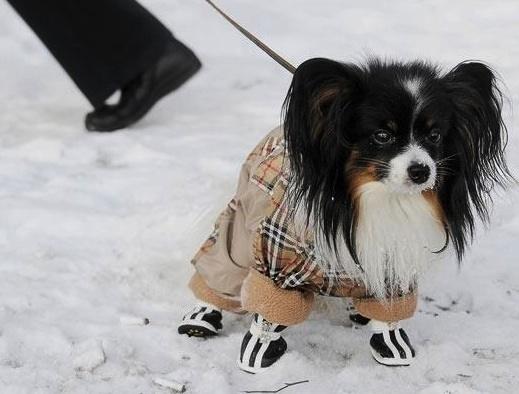 perros fashionistas11